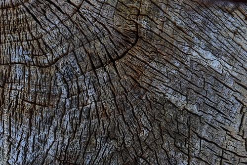 Obraz Wood texture - fototapety do salonu