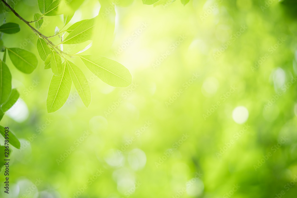 Fototapety, obrazy: Closeup nature view of green leaf on blurred greenery background in garden with copy space using as background natural green plants landscape, ecology, clean fresh wallpaper concept.