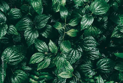 Tropical green leaf in dark tone. Wallpaper Mural