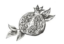 Pomegranate Hand Drawn Fruit Illustration