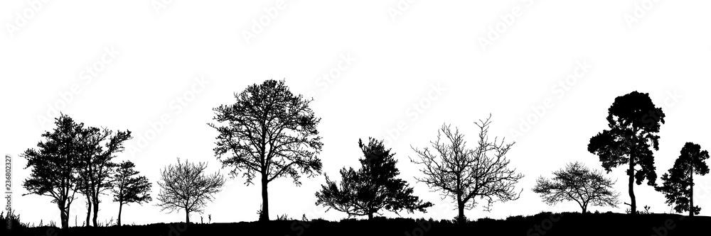 Fototapeta Realistic trees silhouette. Vector set of natural trees. (Vector illustration).Ai10