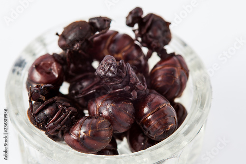 Photo Edible ant traditional from Santander region of Colombia called Hormiga Culona w