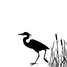 Heron Walking  ,vector Illustration, Silhouette