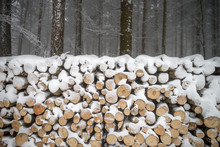 Pile Of Wood Covered By White ...