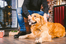 Adult Dog A Golden Retriever,abrador Lies Next To The Owner's Legs Of A Male Breeder.In The Interior Of House On A Wooden Floor Near The Window With A Christmas,Christmas Decor And Boxes With Gifts