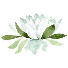White Lotus. Floral Botanical Flower. Watercolor Background Illustration Set. Isolated Lotus Illustration Element.