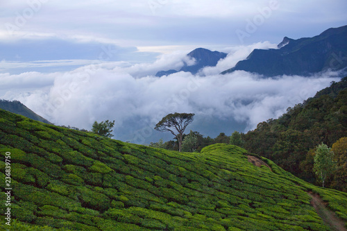 Deurstickers Asia land Tea plantations in Kerala, South India.
