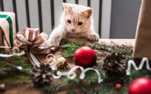 Kitten Playing With Christmas ...