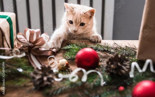 Fotografie, Tablou  Kitten playing with christmas toys.