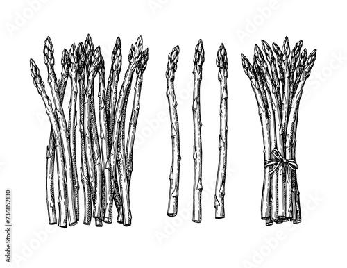 Ink sketch of asparagus. Canvas Print