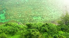 Oceanfront Reef Cinematic Aerial Looking Down Over Green Palm Trees To Aqua Blue Vibrant Water Kauai Hawaii