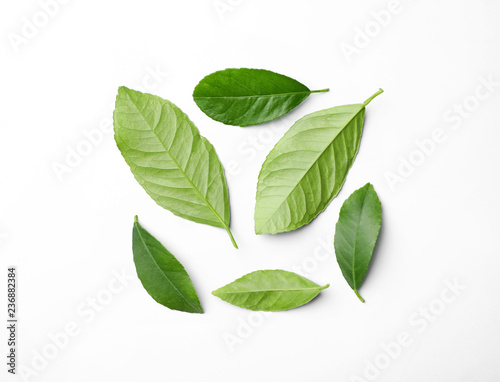 Fresh green citrus leaves on white background, top view
