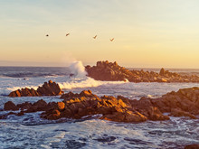 Sunrise At The Pacific Ocean With Crashing Waves And Birds Flying Overhead.