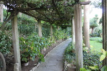 Vine Covered Trellis Walkway With Flowers
