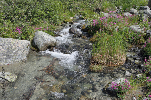 Aluminium Prints Garden Joffre Creek in Joffre Lakes Provincial Park, British Columbia, Canada.