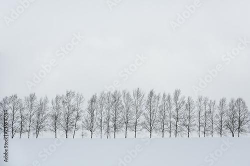 Tapety Minimalistyczne  czarno-bialy-kolor-minimalny-zimowy-krajobraz-rzad-drzew-na-pokrytym-sniegiem-wzgorzu-podczas-opadow-sniegu-w-zimowy-dzien-kopia-przestrzen-siedem-gwiazdek-w-biei-hokkaido-japonia