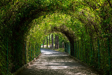 Green Tunnel In The Garden