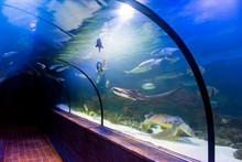 Underwater Tunnel In Oceanarium