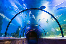 Underwater Tunnel In Oceanarium