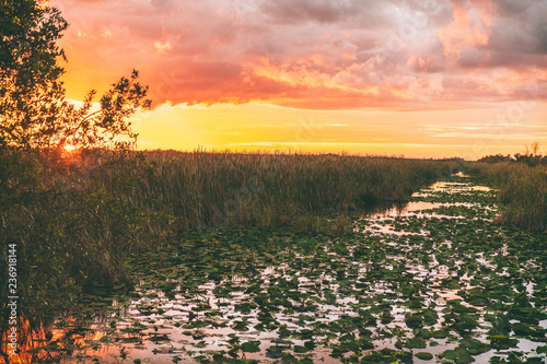 Fototapeten Bekannte Orte in Amerika Everglades Florida wetland, Airboat excursion tour at Everglades National Park at sunset. Nature landscape. USA destination for tourism.