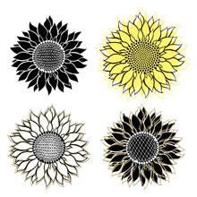 Sunflowers.Sketch. Hand Draw Vector Illustration, Isolated Floral Elements For Design On White Background.Silhouettes.