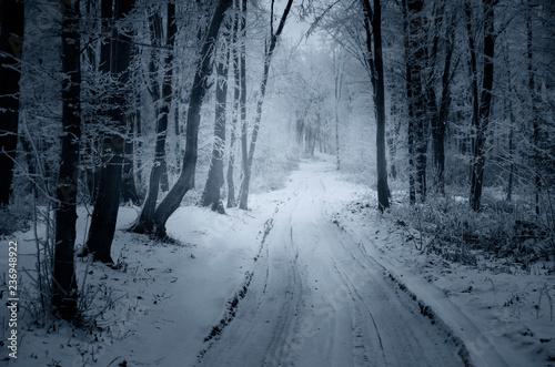 La pose en embrasure Route dans la forêt snowy path through forest in winter, fantasy landscape
