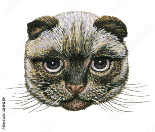 Photo sur Toile Croquis dessinés à la main des animaux head of the Scottish fold cat.for prints on clothes .illustration on isolated white background watercolor hand painting