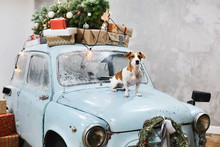 Small Beagle Dog Sits On The Hood Of Blue Retro Car With Presents On The Roof, Decorated For Christmas And New Year Holidays