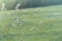 Beautiful Soft Grass Seedheads...