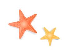 Starfish Sea Stars Closeup Icon Vector Illustration