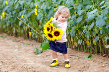 Cute Adorable Toddler Girl On Sunflower Field With Yellow Flowers. Beautiful Baby Child With Blond Hairs. Happy Healthy Little Daughter, Smiling And Holding Bouquet. Outdoor Portrait On Late Summer