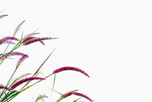 Flower Grass Community With Bl...