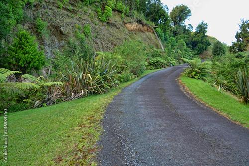 Photo  Winding roadway in the rainforest greenery