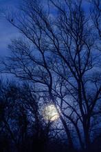 Full Moon Rising Through Trees
