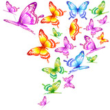 Fototapeta Buterfly - beautiful color butterflies,set, isolated  on a white