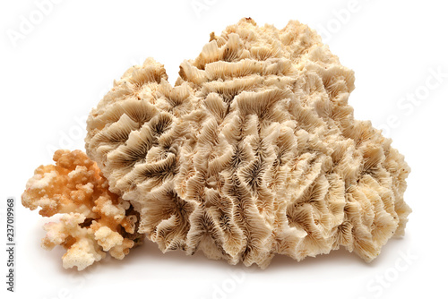 Collection coral isolated on white background. Creative concept, marine life