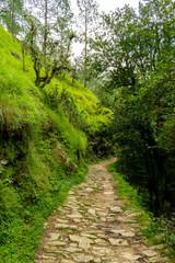 Fototapeta na wymiar serpentine path through the forest, trek to Bhalu Gaad Waterfall, Mukteshwar