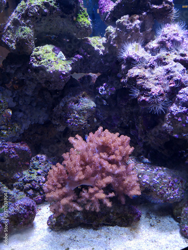 Staande foto Koraalriffen Many fish, anemonsand sea creatures, plants and corals under water near the seabed with sand and stones in blue and purple colors seascapes, views, sea life