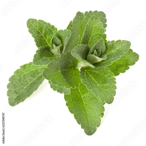 Fotobehang Aromatische Stevia leaves pieces isolated om white background cut out.