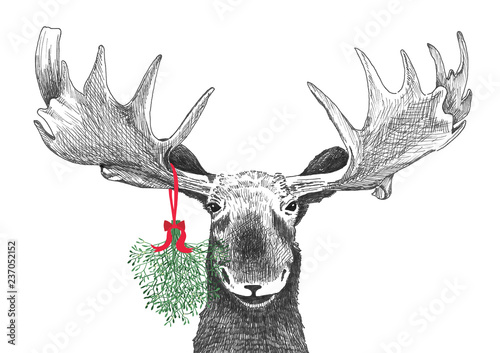 Photo  Fun Christmas moose with mistletoe in funny holiday tradition of kissing under t