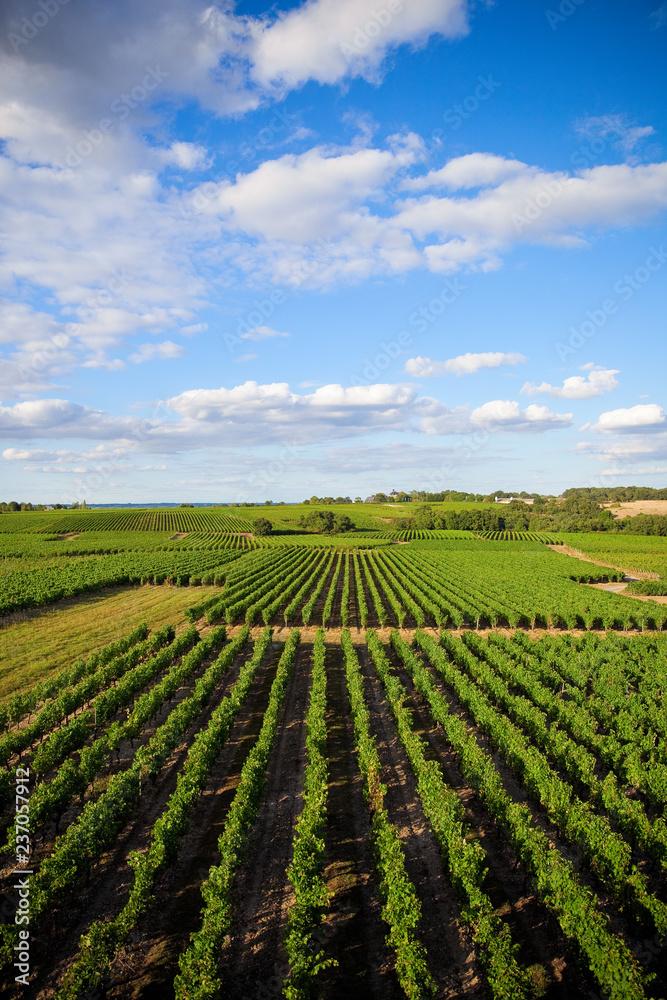 Vue sur les vigne d'un domaine en France