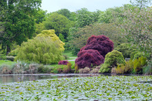Spring Landscaped Garden With Colorful Trees , Red Maple, Flowering Chestnut, Cherry, Willow By A Lake With Water Lilies .