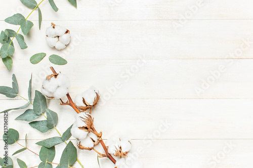 Poster Fleur Eucalyptus twigs and cotton flower on white wooden background. Flat lay, top view, copy space. Floral background, flowers composition.