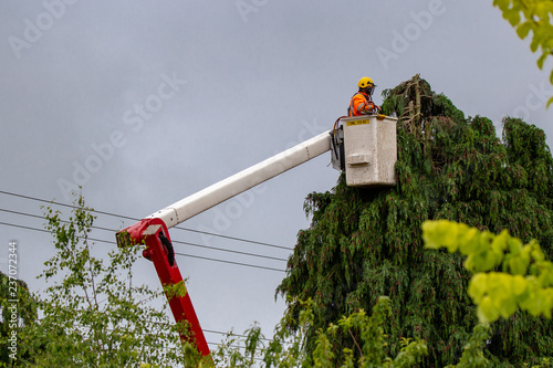 Photo An arborist trims trees around power lines in New Zealand