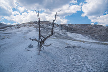 Barren Branches Rise From A Starkly Barren Geothermal Area At Mammoth Springs In Yellowstone National Park