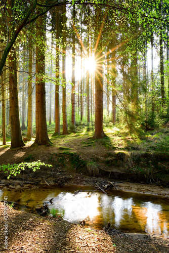 Stampa su Tela Beautiful forest in spring with bright sun shining through the trees