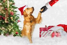 Dog Meeting Santa Claus At Chr...