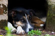 Portrait Mongrel Stray Dog On ...