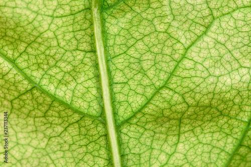 Foto  Foglia verde - particolare 3x