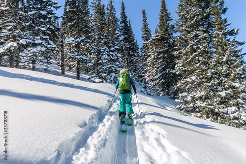 Male skier freeride skitur uphill in snow in winter forest Wallpaper Mural